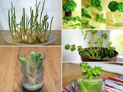 آموزش کاشت مجدد ته مانده سبزیجات درخانه