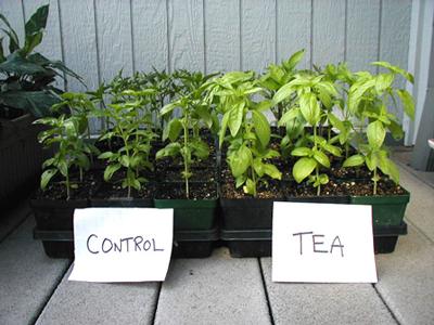 فواید تفاله چای برای گیاهان و خاک باغچه