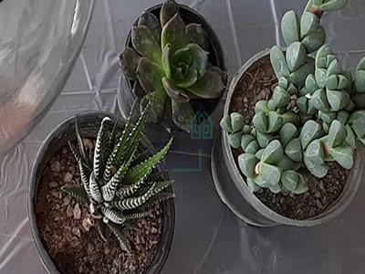 انتخاب گیاه مناسب برای ساخت تراریوم